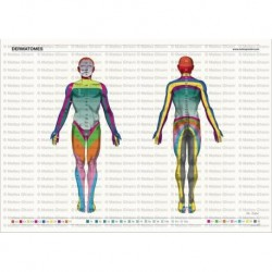 Simulatore per Ginecologia - Addestramento Multifunzionale - Erler Zimmer R10183