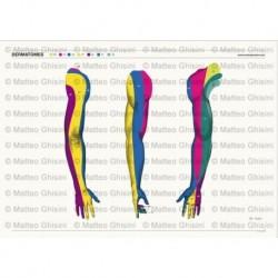 Simulatore per Ginecologia - Organi genitali femminil - Erler Zimmer LM30