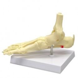 Manichino per l'addestramento standard all'intubazione Erler Zimmer R18100