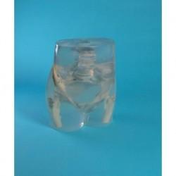 Kit da 10 pezzi, Addestramento alla rianimazione cardiopolmonare, manichino Mini Anne  Plus Erler Zimmer R20045