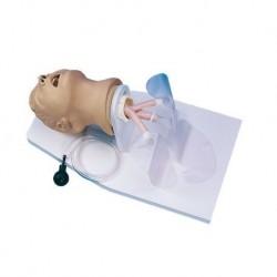 Manichino di Adulto per l'addestramento all'intubazione di un Adulto Erler Zimmer R10014