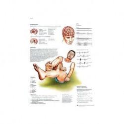 3B Scientific, tavola anatomica, Gola, naso, orecchie (cod, VR4247UU )