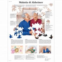 3B Scientific, tavola anatomica, Il Sistema Nervoso (cod, VR4620L)