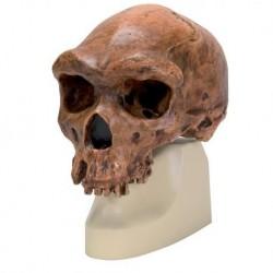 Parodontologia clinica e implantologia orale - Lang, Lindhe