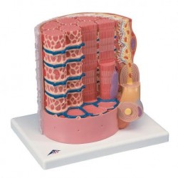 Incontinenza urinaria femminile Manuale per la riabilitazione - Giraudo, Lamberti
