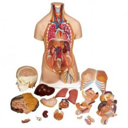 Taping nueromuscolare - trattamento di edemi, ematomi e cicatrici - D. Blow