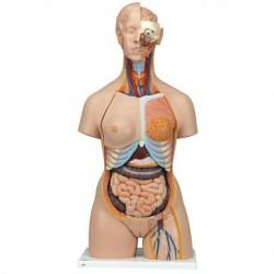3B Scientific, Torso bisessuato, modello di lusso, con schiena aperta, in 28 parti B35