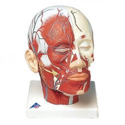 3B Scientific, tavola anatomica, Poster Morbo di Parkinson cod. VR4629UU