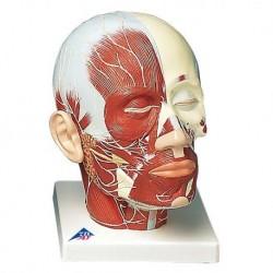 3B Scientific, tavola anatomica, Poster Morbo di Parkinson cod. VR4629L