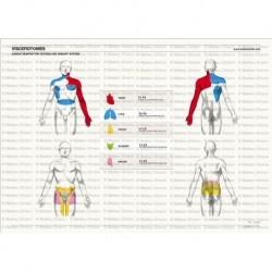 Osteoposter - Viscerotomi Sistema Cardio e Urinario Orizzontale
