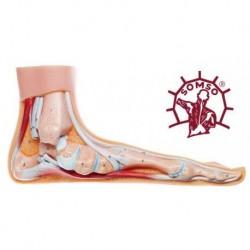 Piede Piatto - Modello anatomico SOMSO NS2