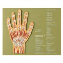 анатомичен модел на човешки скелет не са монтирани, с боядисани мускули 3Б Научния A05 / 2