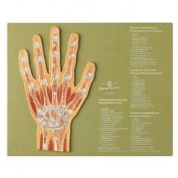 Modelo del esqueleto de la mano con ligamentos y túnel carpiano M33