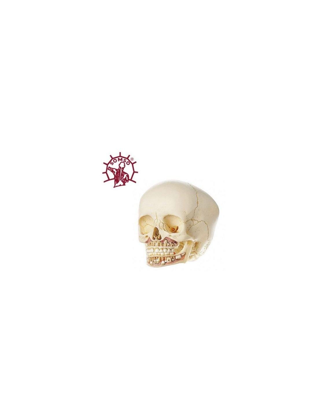 Ungewöhnlich Auge Anatomie Modell Markiert Galerie - Anatomie Ideen ...