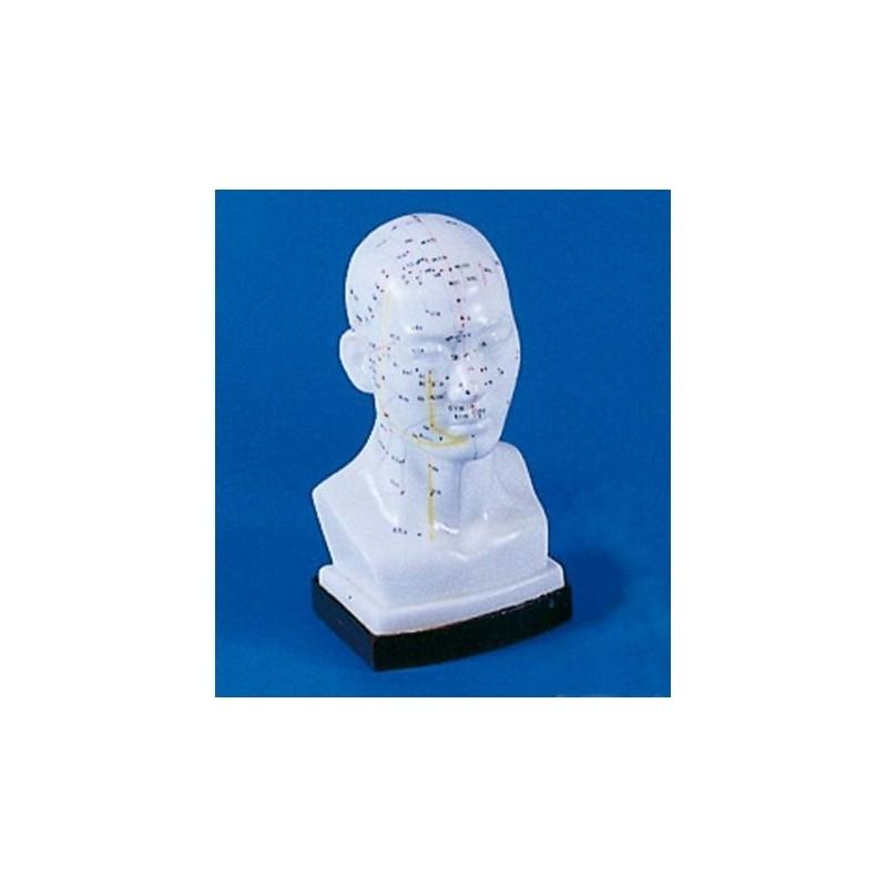 Testa per agopuntura cinese, modello per addestramento Erler Zimmer 2070