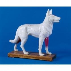 Agopuntura del Cane, modello per addestramento Erler Zimmer 2060