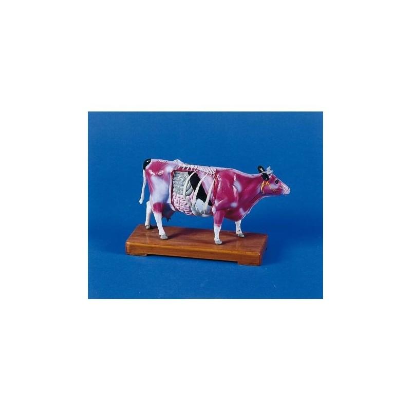 Agopuntura della mucca, modello per addestramento Erler Zimmer 2056