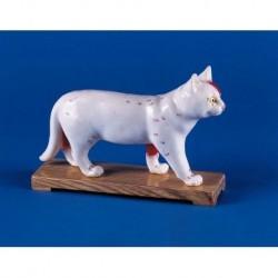 Agopuntura del gatto, modello per addestramento Erler Zimmer 2055