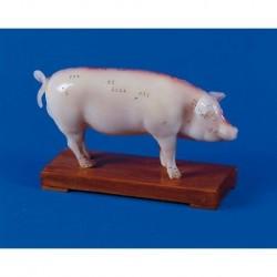 Agopuntura del maiale, modello per addestramento Erler Zimmer 2054