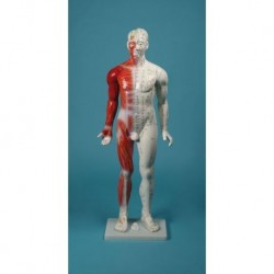 Manichino per insegnamento dell'agopuntura, modello anatomico Erler Zimmer 2050