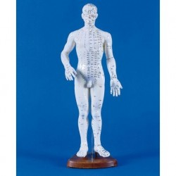 Sam skeleton with joint ligaments and muscle insertions A13