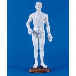 Manichino di uomo per insegnamento dell'agopuntura, modello anatomico Erler Zimmer 2046