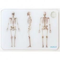 OsteoBoard Scheletro umano piccola