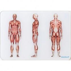 OsteoBoard - Il Sistema Muscolare -  piccola