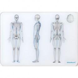 OsteoBoard - Il Corpo Umano -  grande