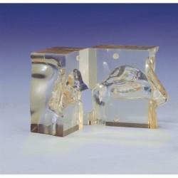 3b Scientific, modello anatomico di 5 vertebre A75/1