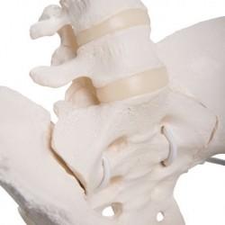 3B Scientific, tavola anatomica, Il Cuore Umano  (cod, VR4334UU)