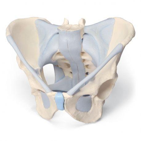Lujo Modelo De La Anatomía Del Pie Bosquejo - Imágenes de Anatomía ...