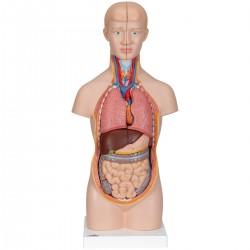3B Scientific, modello anatomico di mini torso umano, scomponibile in 12 parti B22