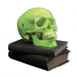 Cranio al Neon, 3B Scientific A20/N