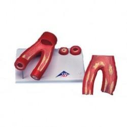 3B Scientific, model anatomiczny tkanek oka 3B MICROanatomy ™ F16