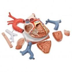 3B Scientific, modello anatomico di occhio ingrandito 5 volte, in 6 parti VJ500C