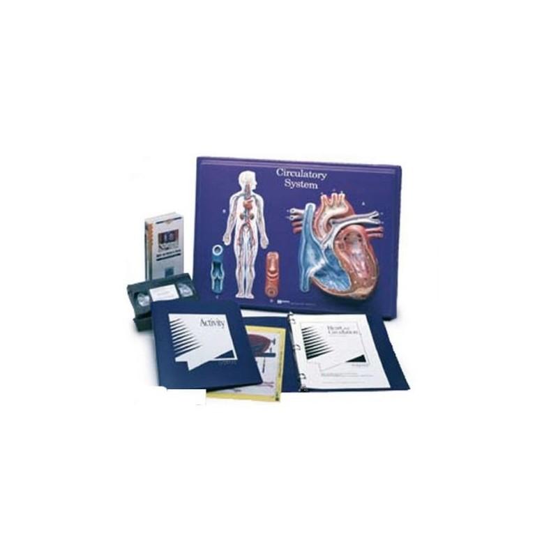 3B Scientific, set per l'insegnamento: Sistema circolatorio W40206