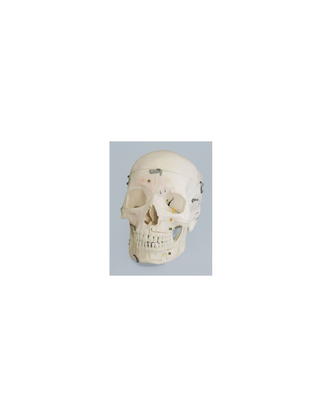 Charmant Nnh Anatomie Ideen - Anatomie Ideen - finotti.info