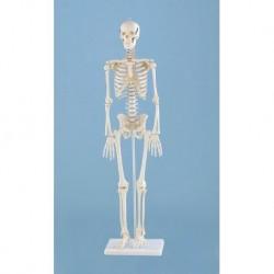 3B Scientific, tavola anatomica, Poster La dentatura (cod. VR4263UU)