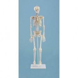 3B Scientific, tavola anatomica, Poster La cute (cod. VR4283L)