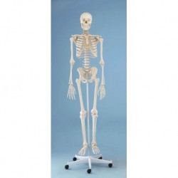 3B Scientific, tavola anatomica, Poster La cute (cod. VR4283UU)