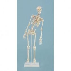 3B Scientific, tavola anatomica, Poster Cancro della pelle (cod. VR4295UU)