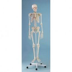 3B Scientific, tavola anatomica, Poster L'apparato respiratorio (cod. VR4322UU)
