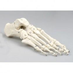 Sgabello Tuttocomodo Osteo